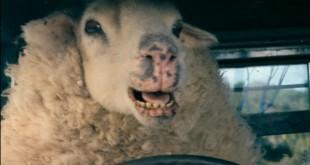czarna owca film