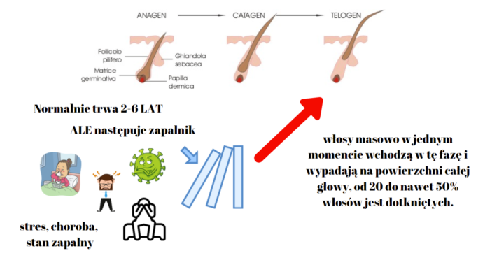 łysienie telogenowe po covid-19